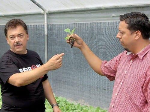 nick perdomo silvio mendoza explaining unique tobacco seedling growing system