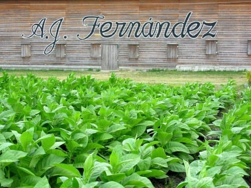 aj fernandez tobacco farm depot