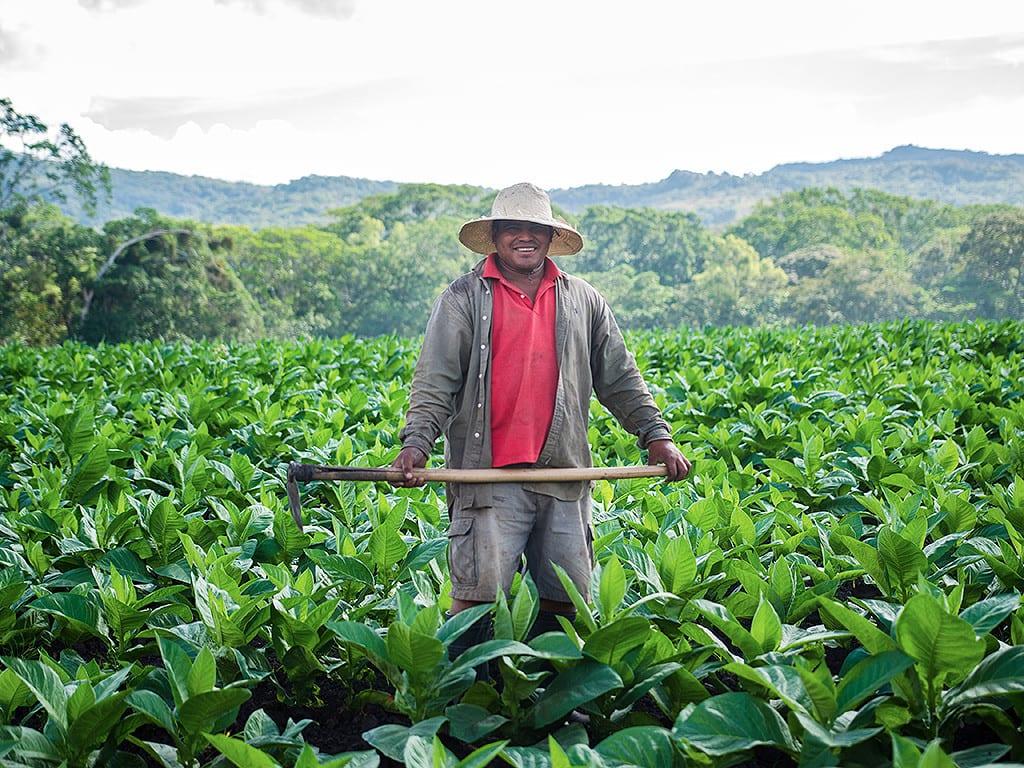 field worker tobacco field surrounding esteli