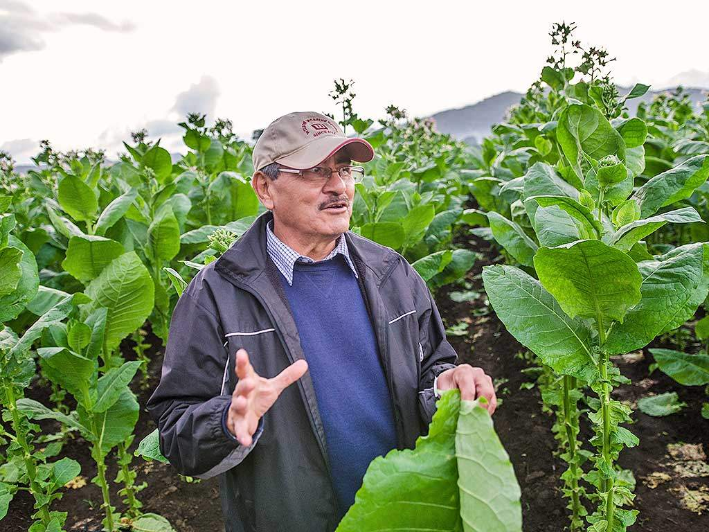 felipe lopes meza explaining tobacco leaf farm turrent