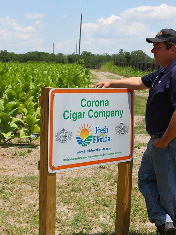 Read About Jeff Borysiewicz's Project of Growing Tobacco in Florida