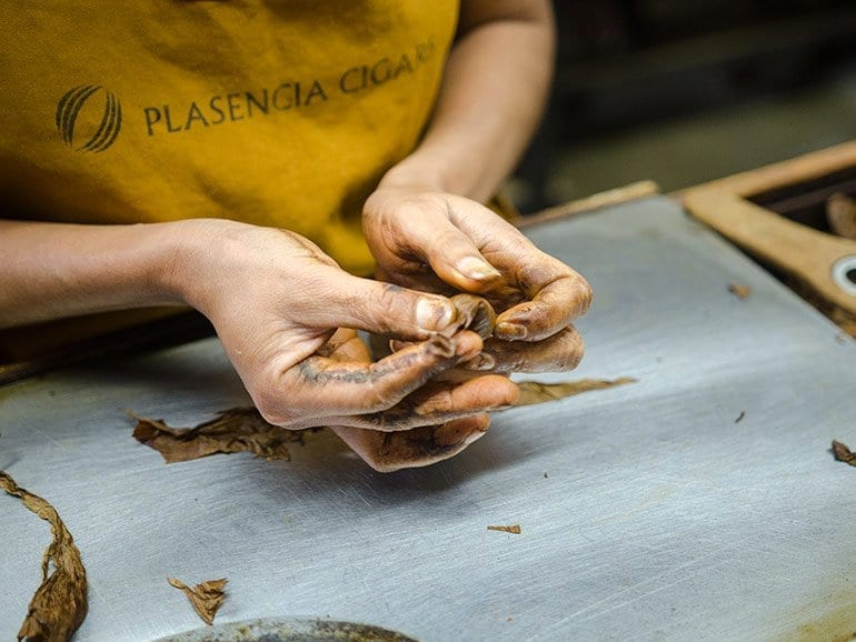 Cigar rolling at the Plasencia factory