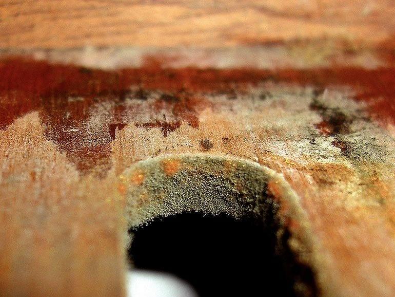 Mold in a Humidor