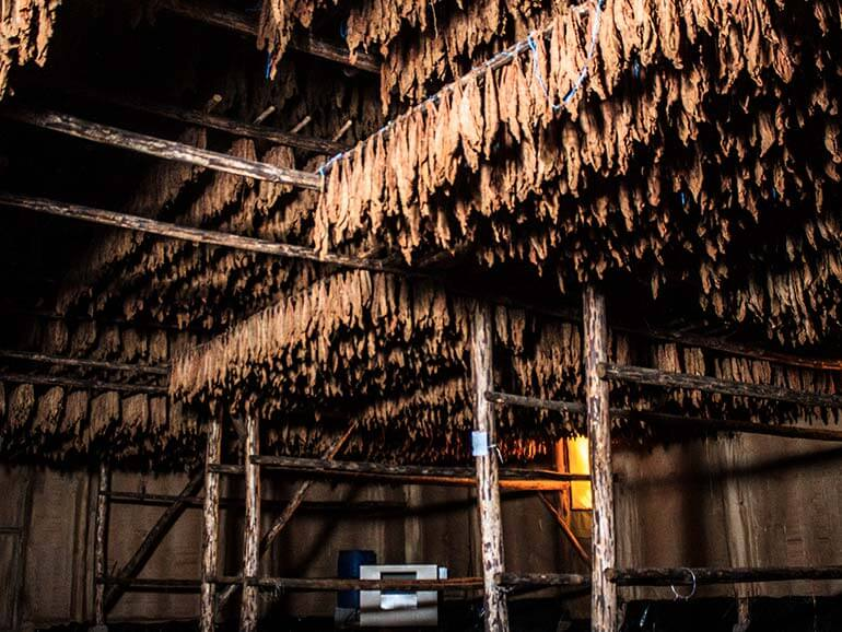 Camacho Drying Barn