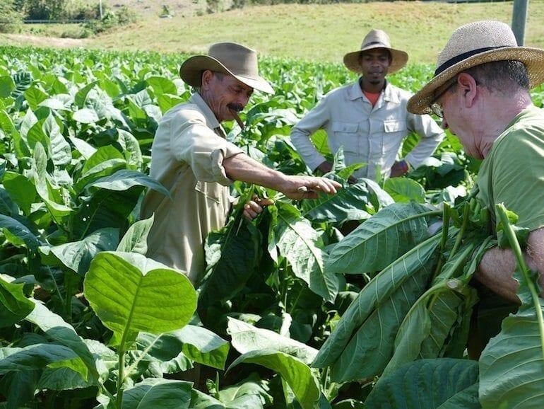 Lorscher Tabakpflanzer in Kuba