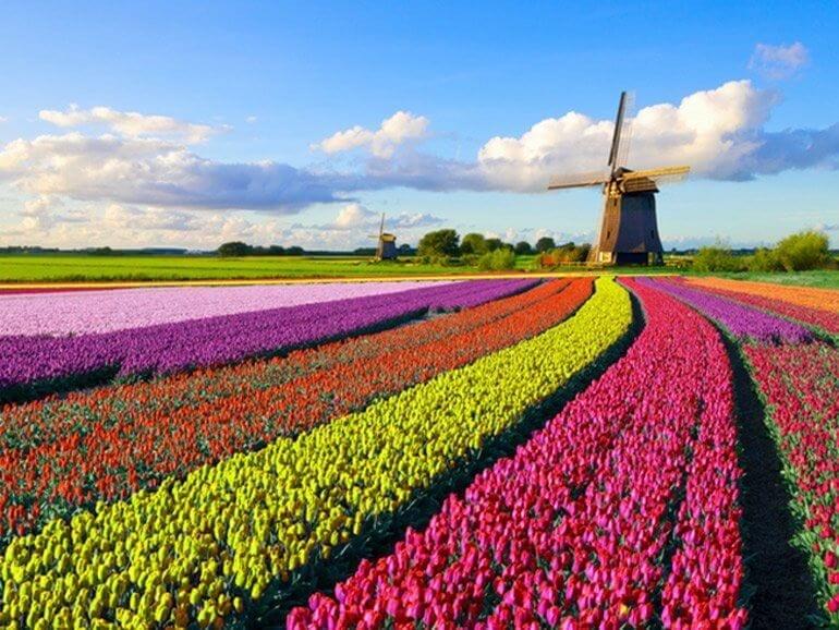 Anti Raucher Lobby Niederlande