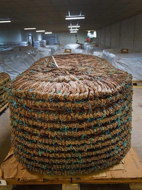 Storage Tabak
