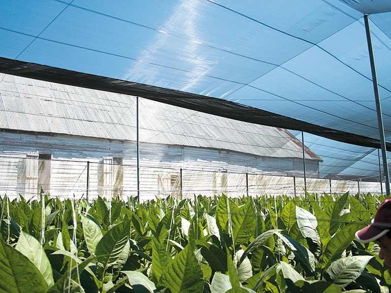 Robaina Farm