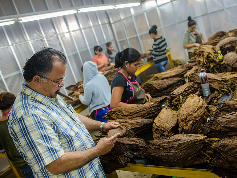 OIliva Cigar Factory Estelí Nicaragua Gilberto