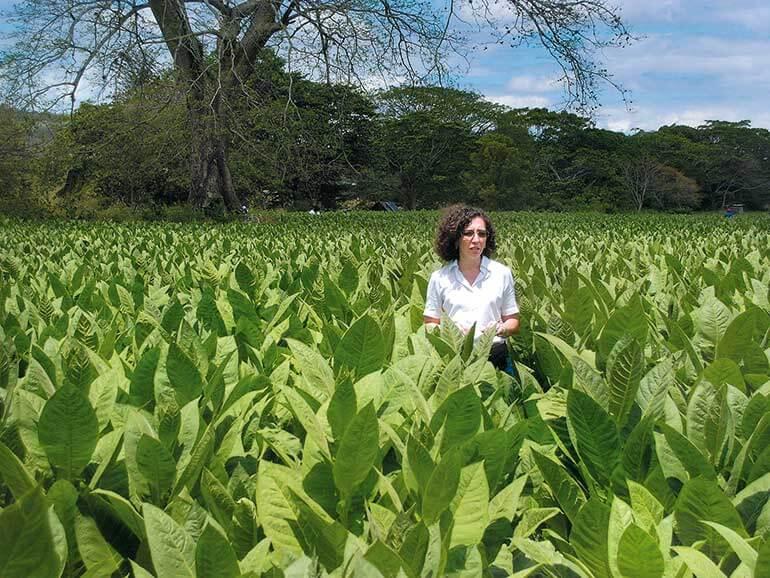 Maya Selva im Tabakfeld Honduras